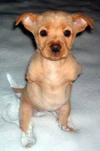 A little dog streches out its body and stands on two legs  (Photo: The Stringfellows)